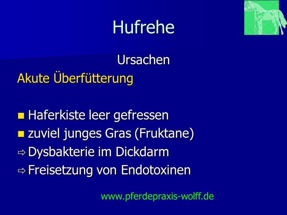 Hufrehe Fallbeispiel Fallbeispiel Hufrehe mit Hufbeindurch- bruch Hufrehe mit Hufbeindurch- bruch Senkung Senkung Rotation Rotation www.pferdepraxis-wolff.de