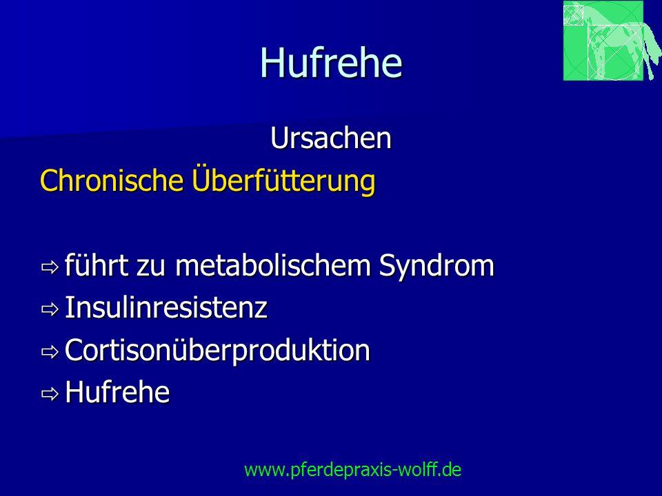 Hufrehe Ursachen Chronische Überfütterung führt zu metabolischem Syndrom führt zu metabolischem Syndrom Insulinresistenz Insulinresistenz Cortisonüber