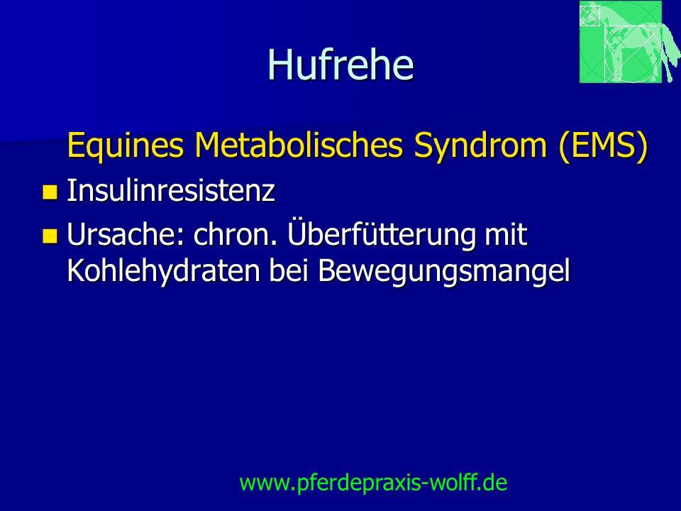 Hufrehe Equines Metabolisches Syndrom (EMS) Insulinresistenz Insulinresistenz Ursache: chron. Überfütterung mit Kohlehydraten bei Bewegungsmangel Ursa
