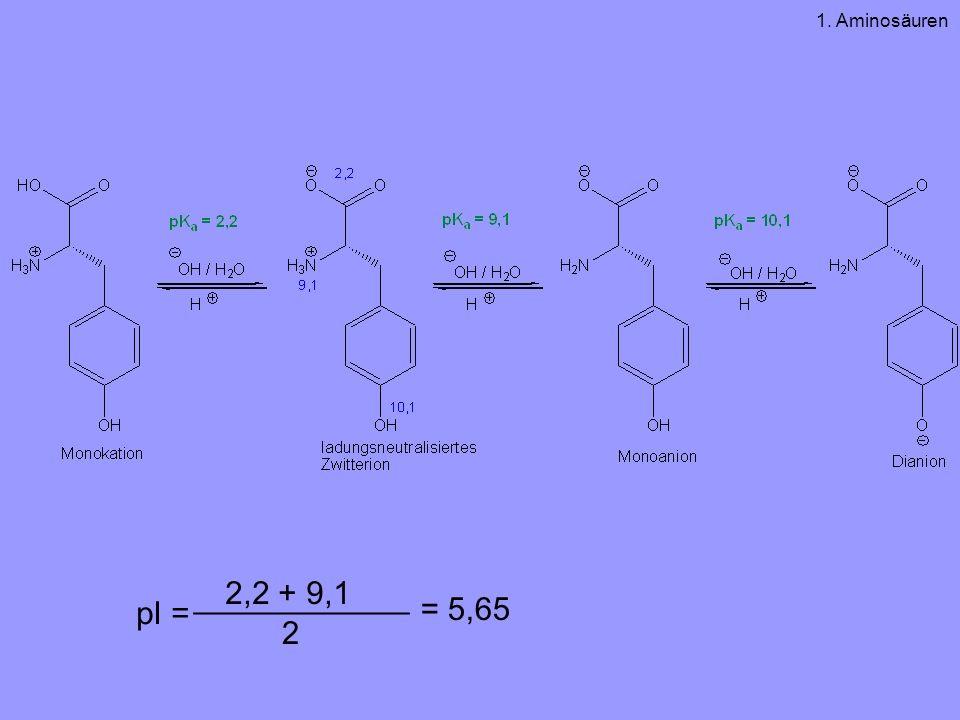 pI = ____________ 2,2 + 9,1 2 = 5,65 1. Aminosäuren