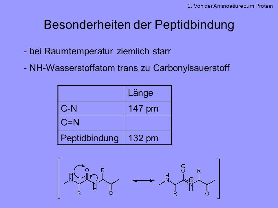 Besonderheiten der Peptidbindung - bei Raumtemperatur ziemlich starr - NH-Wasserstoffatom trans zu Carbonylsauerstoff 2. Von der Aminosäure zum Protei