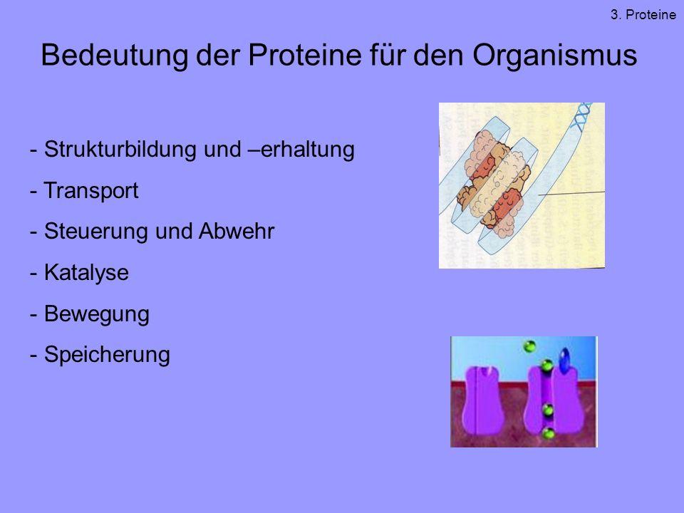 Bedeutung der Proteine für den Organismus - Strukturbildung und –erhaltung - Transport - Steuerung und Abwehr - Katalyse - Bewegung - Speicherung 3.