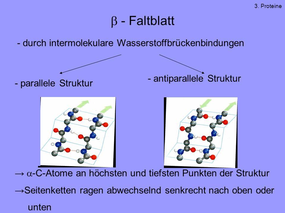 - Faltblatt - durch intermolekulare Wasserstoffbrückenbindungen - parallele Struktur - antiparallele Struktur -C-Atome an höchsten und tiefsten Punkten der Struktur Seitenketten ragen abwechselnd senkrecht nach oben oder unten 3.