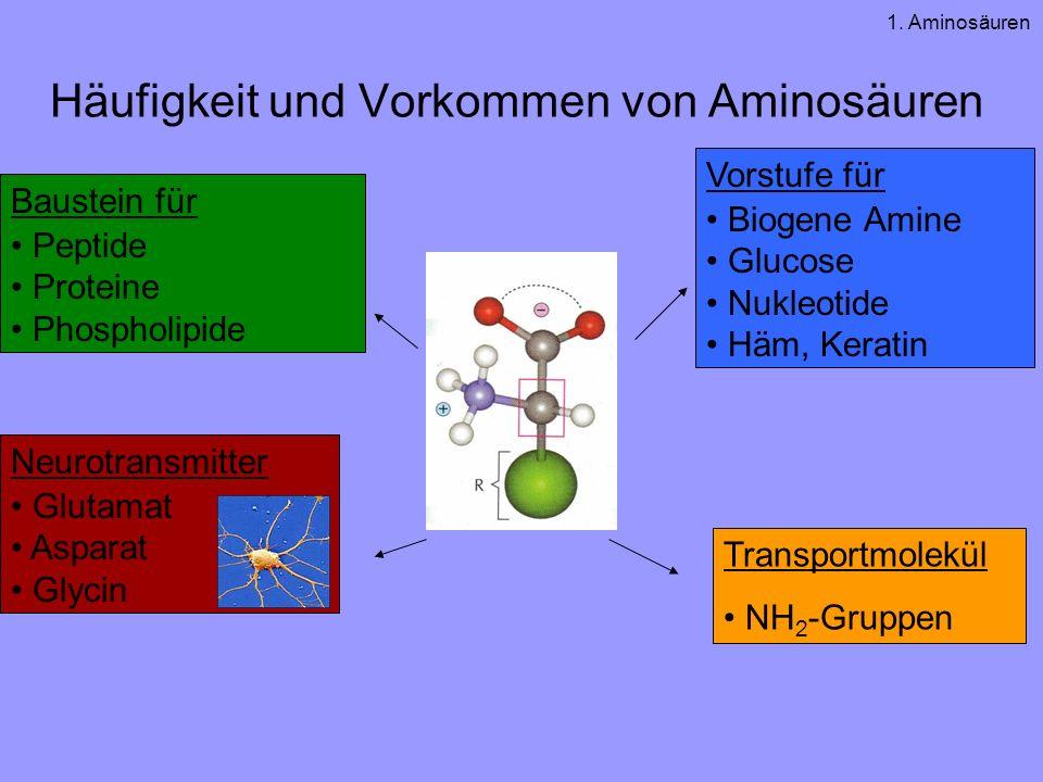 Häufigkeit und Vorkommen von Aminosäuren Vorstufe für Biogene Amine Glucose Nukleotide Häm, Keratin Baustein für Peptide Proteine Phospholipide Neurotransmitter Glutamat Asparat Glycin Transportmolekül NH 2 -Gruppen 1.