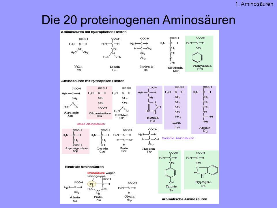 Die 20 proteinogenen Aminosäuren 1. Aminosäuren