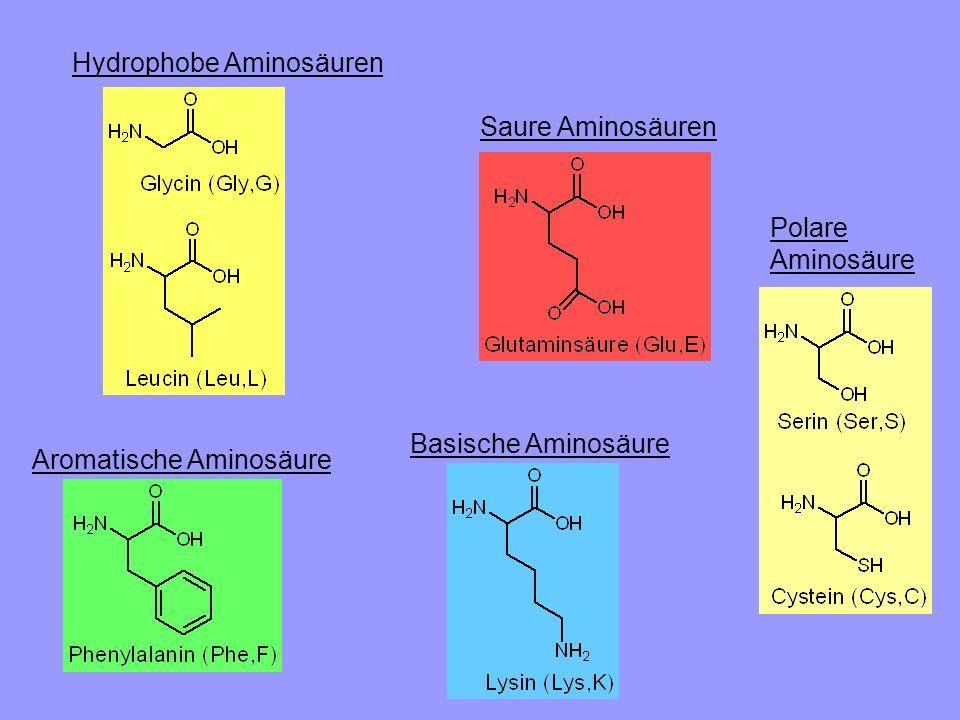 Hydrophobe Aminosäuren Saure Aminosäuren Aromatische Aminosäure Basische Aminosäure Polare Aminosäure