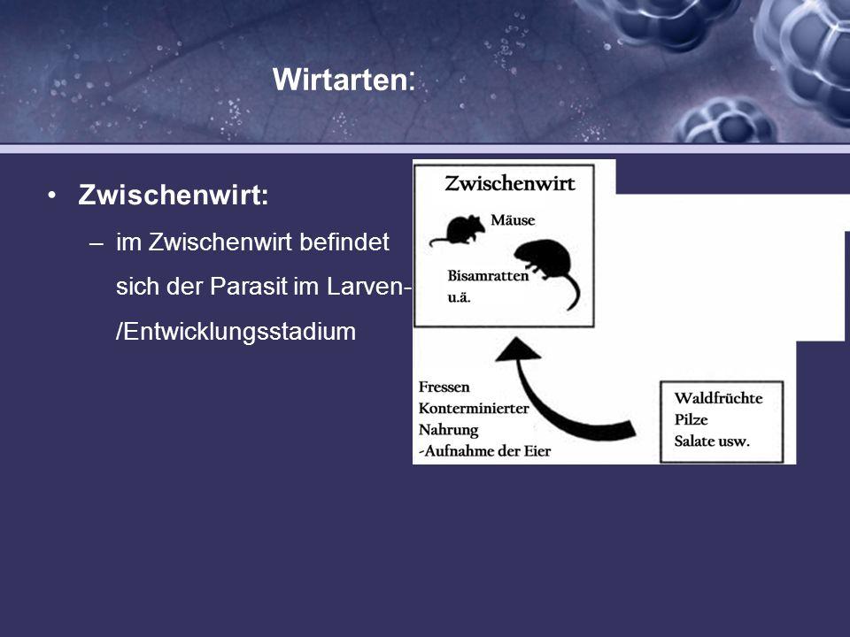 Wirtarten : Zwischenwirt: –im Zwischenwirt befindet sich der Parasit im Larven- /Entwicklungsstadium