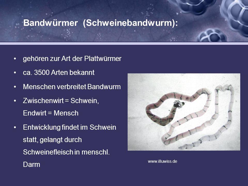 Bandwürmer (Schweinebandwurm): gehören zur Art der Plattwürmer ca. 3500 Arten bekannt Menschen verbreitet Bandwurm Zwischenwirt = Schwein, Endwirt = M
