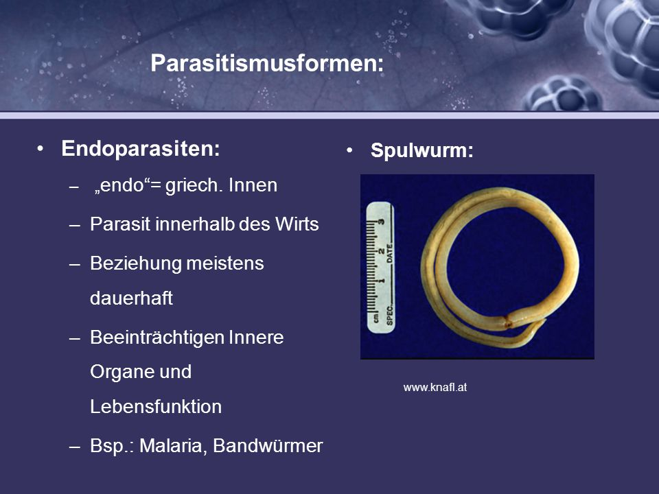 Parasitismusformen: Endoparasiten: – endo= griech. Innen –Parasit innerhalb des Wirts –Beziehung meistens dauerhaft –Beeinträchtigen Innere Organe und
