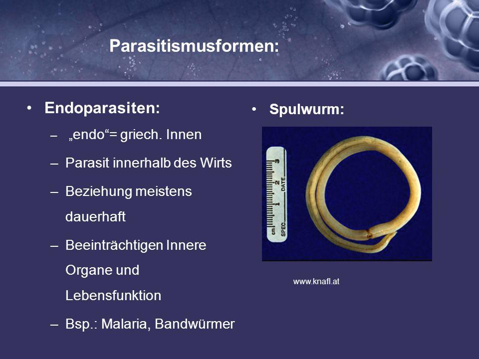 Parasitismusformen: Ektoparasiten: – ekto= griech.
