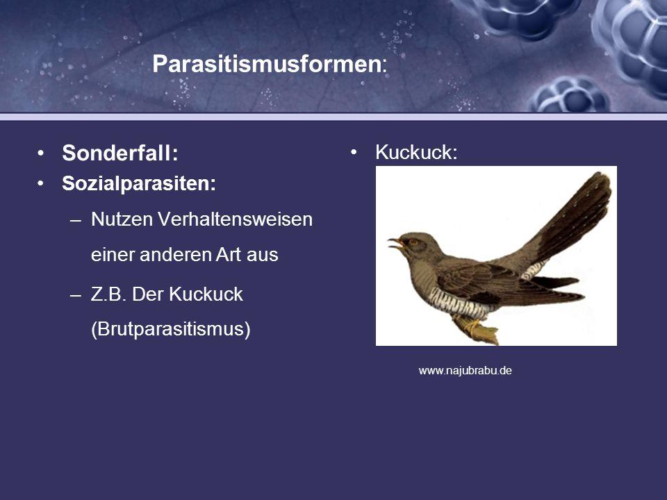 Parasitismusformen: Sonderfall: Sozialparasiten: –Nutzen Verhaltensweisen einer anderen Art aus –Z.B. Der Kuckuck (Brutparasitismus) Kuckuck: www.naju