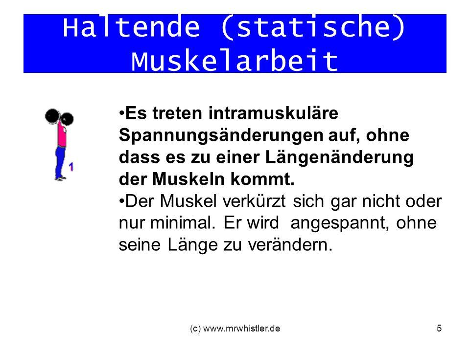 Haltende (statische) Muskelarbeit (c) www.mrwhistler.de5 Es treten intramuskuläre Spannungsänderungen auf, ohne dass es zu einer Längenänderung der Mu