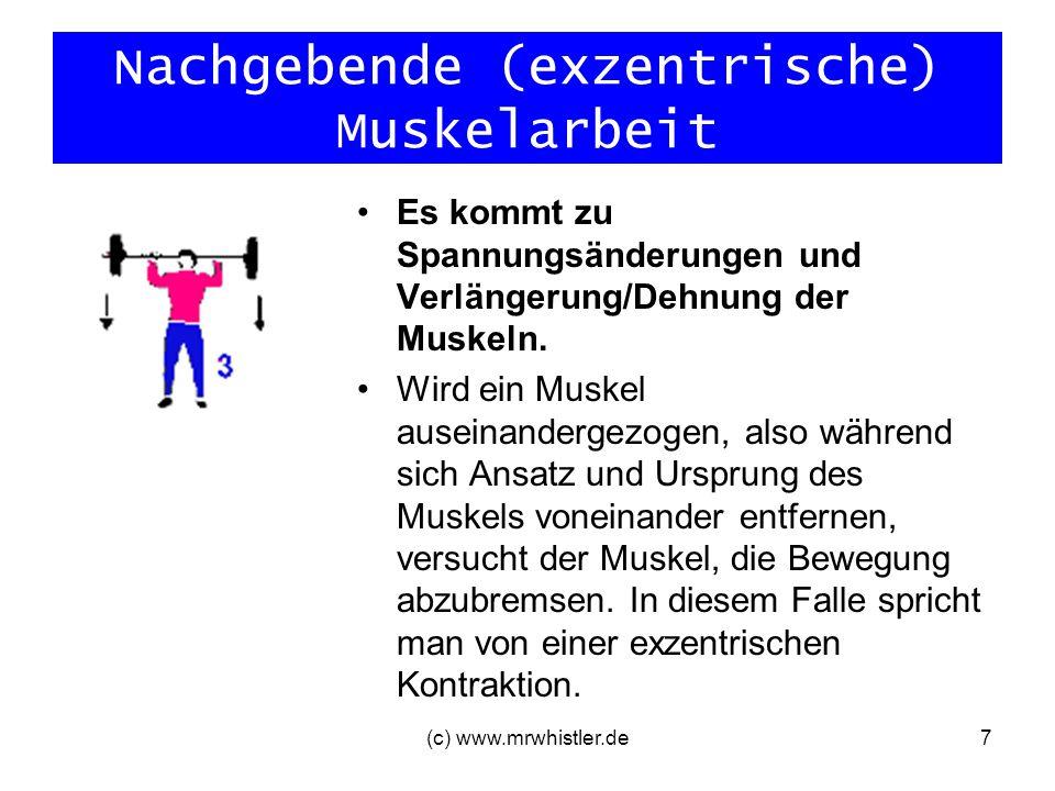 Nachgebende (exzentrische) Muskelarbeit Es kommt zu Spannungsänderungen und Verlängerung/Dehnung der Muskeln. Wird ein Muskel auseinandergezogen, also