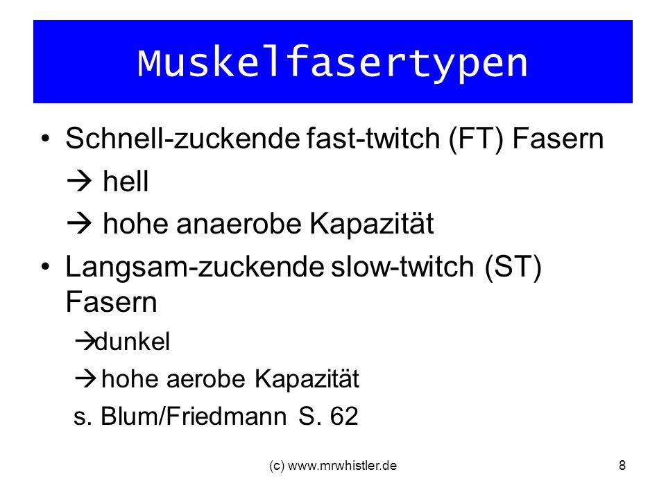 Muskelfasertypen Schnell-zuckende fast-twitch (FT) Fasern hell hohe anaerobe Kapazität Langsam-zuckende slow-twitch (ST) Fasern dunkel hohe aerobe Kap