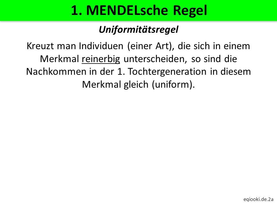 eqiooki.de.2a 1. MENDELsche Regel Uniformitätsregel Kreuzt man Individuen (einer Art), die sich in einem Merkmal reinerbig unterscheiden, so sind die