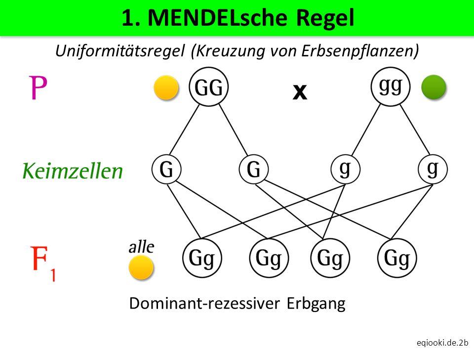 eqiooki.de.2b 1. MENDELsche Regel Dominant-rezessiver Erbgang Uniformitätsregel (Kreuzung von Erbsenpflanzen)