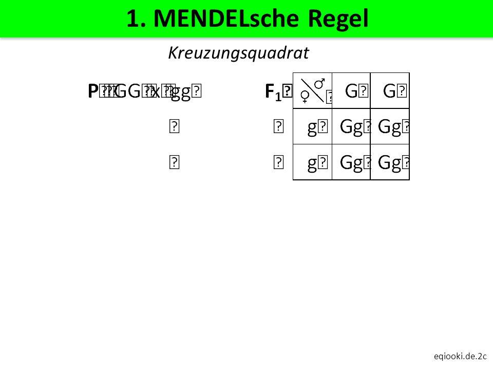eqiooki.de.2c 1. MENDELsche Regel Kreuzungsquadrat