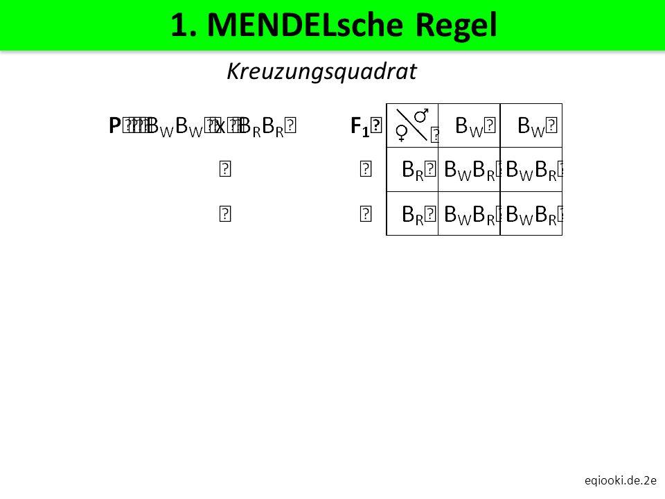 eqiooki.de.2e 1. MENDELsche Regel Kreuzungsquadrat