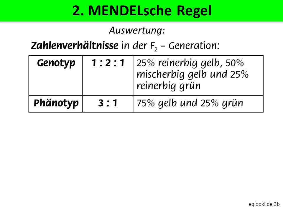 eqiooki.de.3b 2. MENDELsche Regel Auswertung: