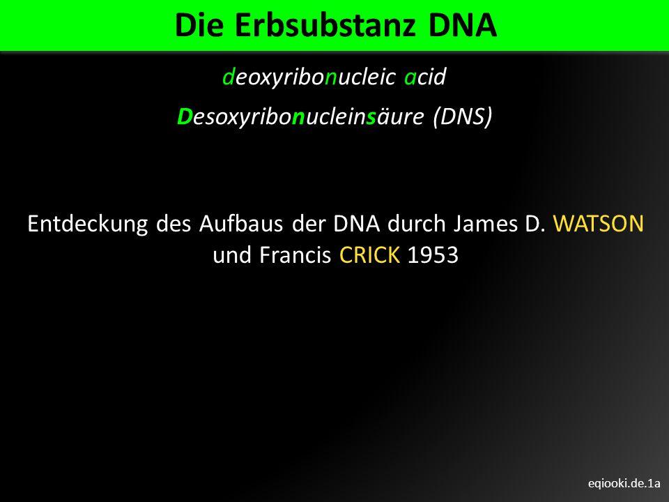 eqiooki.de.1a Die Erbsubstanz DNA deoxyribonucleic acid Desoxyribonucleinsäure (DNS) Entdeckung des Aufbaus der DNA durch James D. WATSON und Francis
