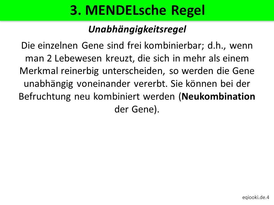eqiooki.de.4 3. MENDELsche Regel Unabhängigkeitsregel Die einzelnen Gene sind frei kombinierbar; d.h., wenn man 2 Lebewesen kreuzt, die sich in mehr a