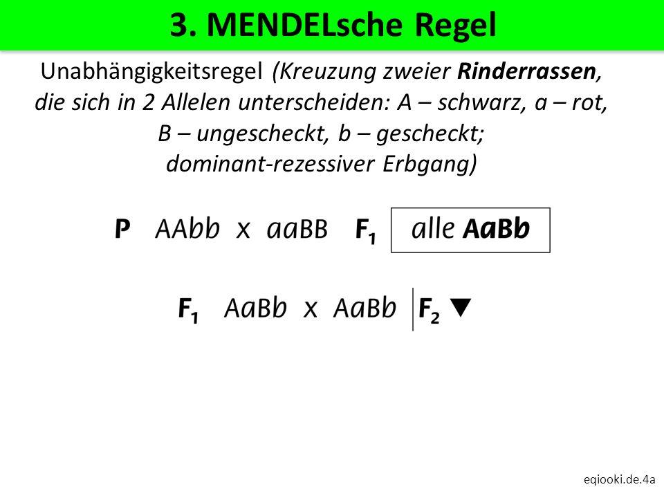 eqiooki.de.4a 3. MENDELsche Regel Unabhängigkeitsregel (Kreuzung zweier Rinderrassen, die sich in 2 Allelen unterscheiden: A – schwarz, a – rot, B – u