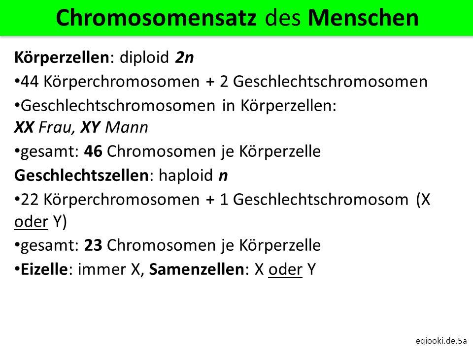eqiooki.de.5a Chromosomensatz des Menschen Körperzellen: diploid 2n 44 Körperchromosomen + 2 Geschlechtschromosomen Geschlechtschromosomen in Körperze