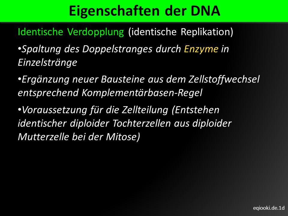 eqiooki.de.1d Eigenschaften der DNA Identische Verdopplung (identische Replikation) Spaltung des Doppelstranges durch Enzyme in Einzelstränge Ergänzun