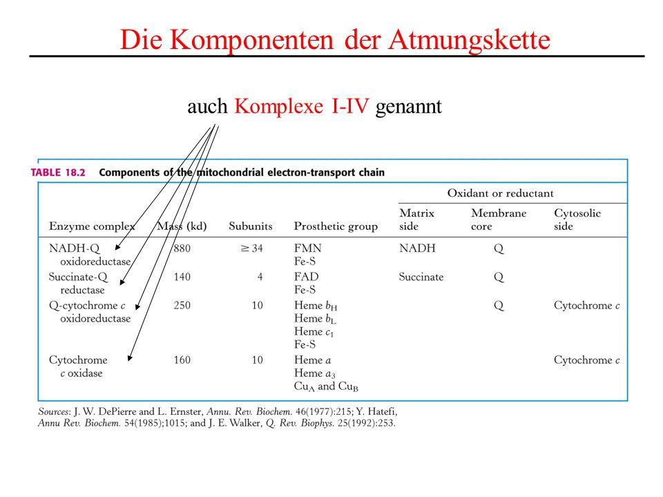 Die Komponenten der Atmungskette auch Komplexe I-IV genannt