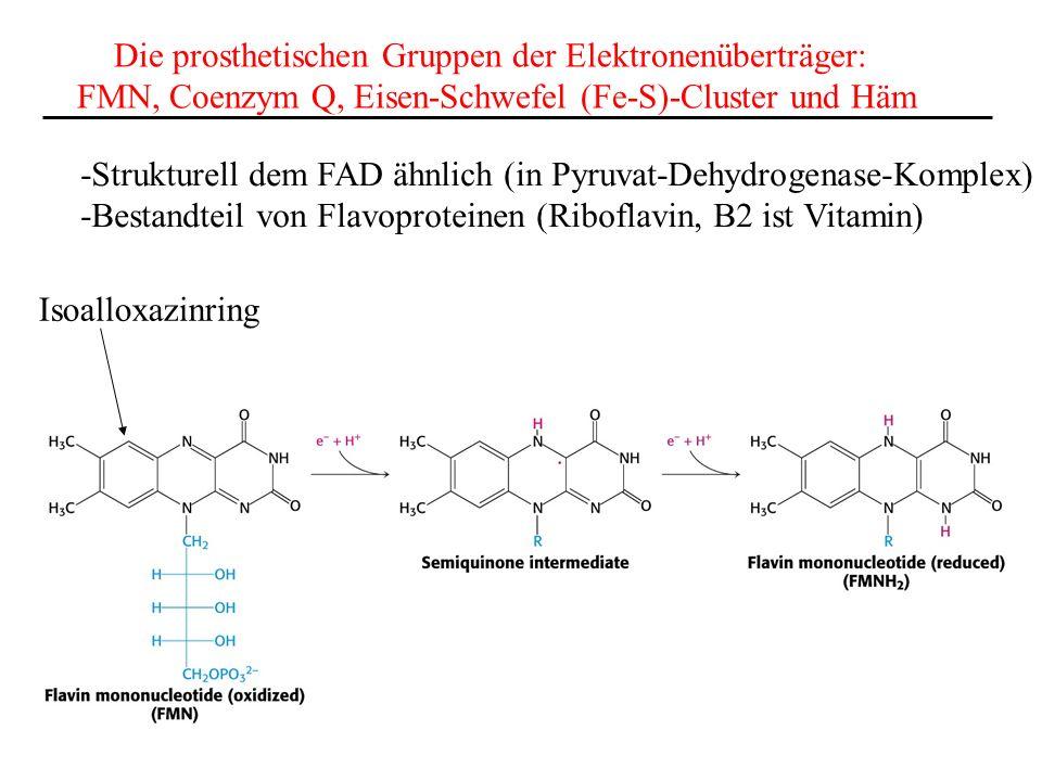 Die prosthetischen Gruppen der Elektronenüberträger: FMN, Coenzym Q, Eisen-Schwefel (Fe-S)-Cluster und Häm Isoalloxazinring -Strukturell dem FAD ähnli