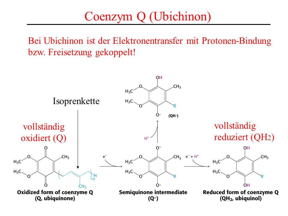Coenzym Q (Ubichinon) Isoprenkette vollständig oxidiert (Q) vollständig reduziert (QH 2 ) Bei Ubichinon ist der Elektronentransfer mit Protonen-Bindun