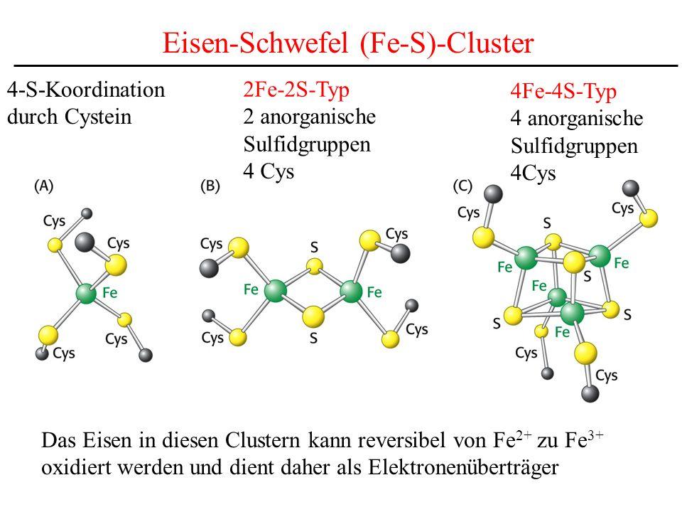Eisen-Schwefel (Fe-S)-Cluster 4-S-Koordination durch Cystein 2Fe-2S-Typ 2 anorganische Sulfidgruppen 4 Cys 4Fe-4S-Typ 4 anorganische Sulfidgruppen 4Cy