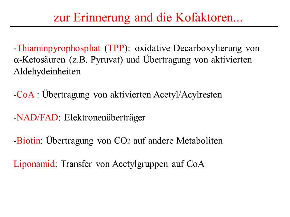 zur Erinnerung and die Kofaktoren... -Thiaminpyrophosphat (TPP): oxidative Decarboxylierung von -Ketosäuren (z.B. Pyruvat) und Übertragung von aktivie