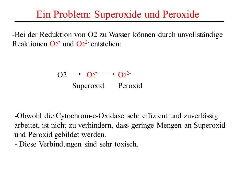 Ein Problem: Superoxide und Peroxide -Bei der Reduktion von O2 zu Wasser können durch unvollständige Reaktionen O 2 - und O 2 2- entstehen:. O2 O 2 -