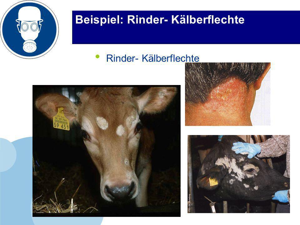 www.lkv-milchwirtschaft.de Beispiel: Rinder- Kälberflechte Rinder- Kälberflechte