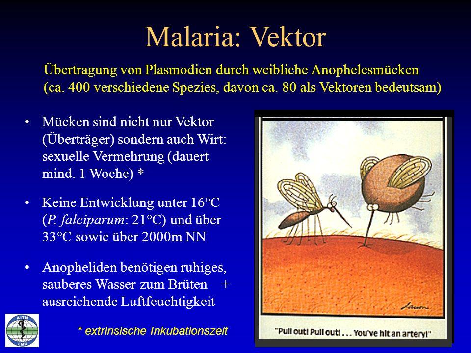 Malaria: Vektor Mücken sind nicht nur Vektor (Überträger) sondern auch Wirt: sexuelle Vermehrung (dauert mind. 1 Woche) * Keine Entwicklung unter 16°C