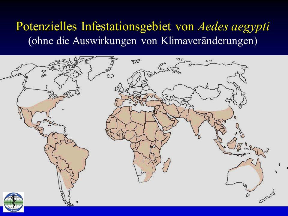 Potenzielles Infestationsgebiet von Aedes aegypti (ohne die Auswirkungen von Klimaveränderungen)