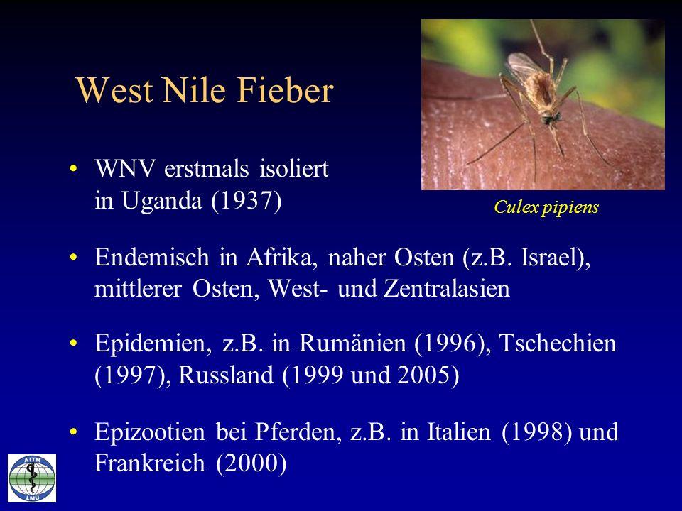 West Nile Fieber WNV erstmals isoliert in Uganda (1937) Endemisch in Afrika, naher Osten (z.B. Israel), mittlerer Osten, West- und Zentralasien Epidem