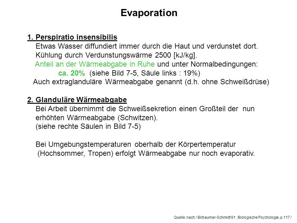 Quelle: nach / Birbaumer-Schmidt 91 :Biologische Psychologie, p.117 / Evaporation 1. Perspiratio insensibilis Etwas Wasser diffundiert immer durch die