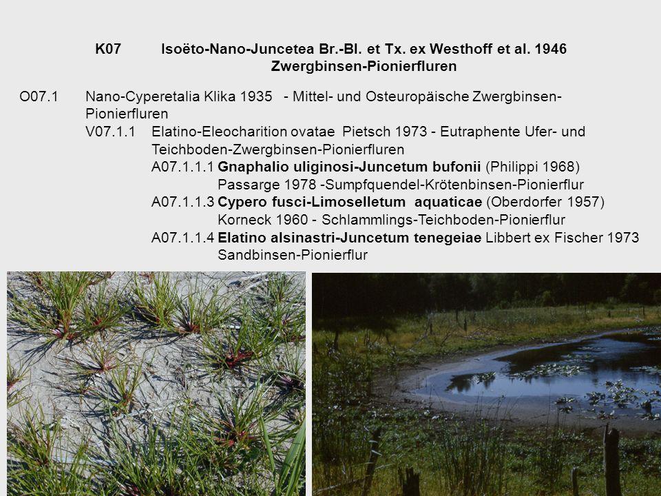 K07Isoëto-Nano-Juncetea Br.-Bl. et Tx. ex Westhoff et al. 1946 Zwergbinsen-Pionierfluren O07.1Nano-Cyperetalia Klika 1935- Mittel- und Osteuropäische