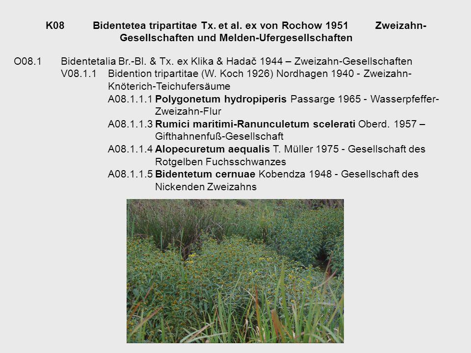 K08Bidentetea tripartitae Tx. et al. ex von Rochow 1951Zweizahn- Gesellschaften und Melden-Ufergesellschaften O08.1Bidentetalia Br.-Bl. & Tx. ex Klika