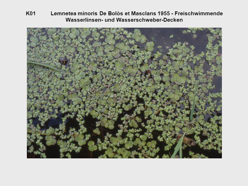 O01.1Lemnetalia minioris De Bolòs et Masclans 1955 - Wasserlinsen- und Wasserschweber-Gesellschaften V01.1.1Lemnion trisulcae Den Hartog et Segal 1964 - Wasserschweber- Gesellschaften nährstoffärmerer, kalkarmer Gewässer A01.1.1.1Riccietum fluitantis Slavnić 1956 - Wasserlebermoos- Schwebematte A01.1.1.2Lemno-Utricularietum Soó 1947 - Wasserschlauch- Schwimmmatten V01.1.2Hydrocharition Rübel 1933 - Froschbiss-Schwimmdecken A01.1.2.1Stratiotetum aloidis Nowinski 1930 - Froschbiss-Krebsscheren- Schwimmdecken V01.1.3Lemnion gibbae Tx.