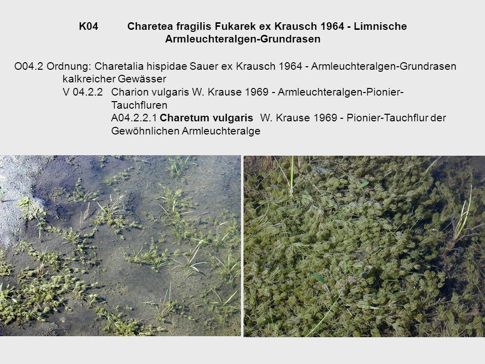 K04Charetea fragilis Fukarek ex Krausch 1964 - Limnische Armleuchteralgen-Grundrasen O04.2 Ordnung: Charetalia hispidae Sauer ex Krausch 1964 - Armleu