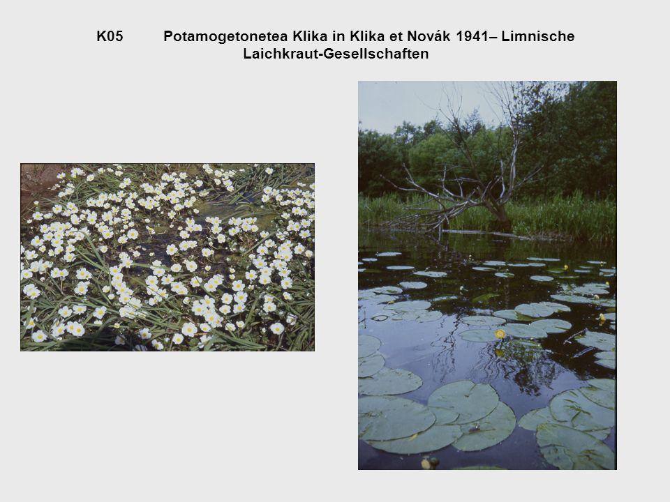 O05.1Callitricho-Batrachietalia Passarge 1978Wasserstern-Wasserhahnenfuß- Gesellschaften des Flachwassers V05.1.1Ranunculion aquatilis Passarge 1964Tümpelufer-Fluren A05.1.1.1Hottonietum palustris Tx.