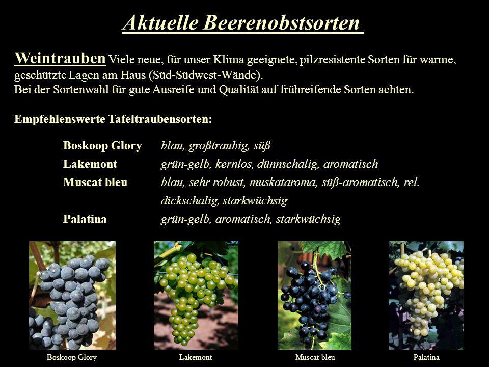 Weintrauben Viele neue, für unser Klima geeignete, pilzresistente Sorten für warme, geschützte Lagen am Haus (Süd-Südwest-Wände). Bei der Sortenwahl f