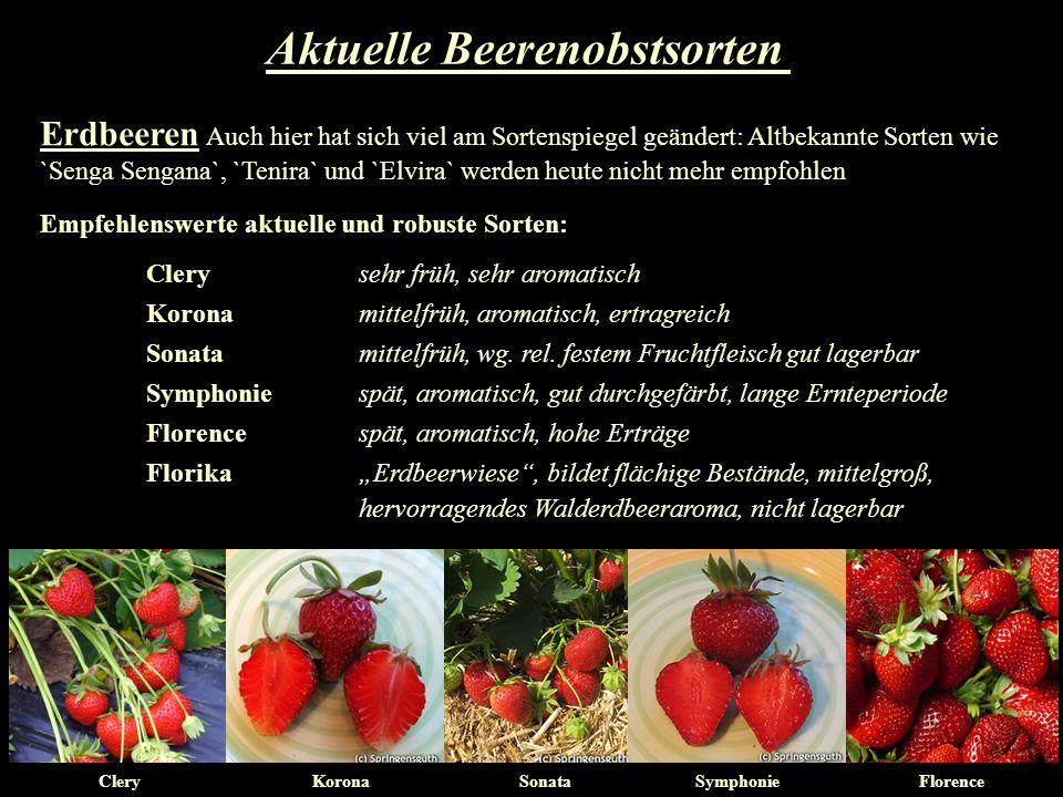 Erdbeeren Auch hier hat sich viel am Sortenspiegel geändert: Altbekannte Sorten wie `Senga Sengana`, `Tenira` und `Elvira` werden heute nicht mehr emp