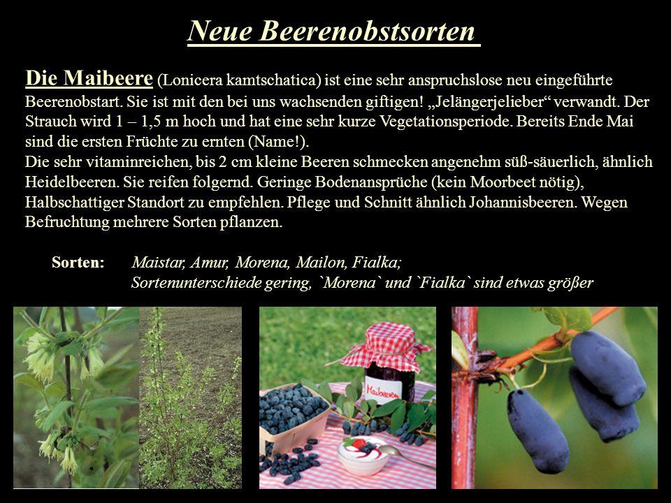 Neue Beerenobstsorten Die Maibeere (Lonicera kamtschatica) ist eine sehr anspruchslose neu eingeführte Beerenobstart. Sie ist mit den bei uns wachsend