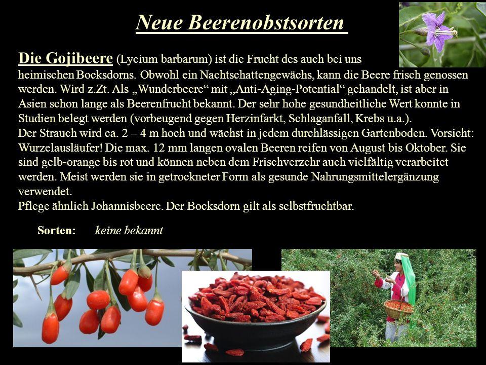 Neue Beerenobstsorten Die Gojibeere (Lycium barbarum) ist die Frucht des auch bei uns heimischen Bocksdorns. Obwohl ein Nachtschattengewächs, kann die