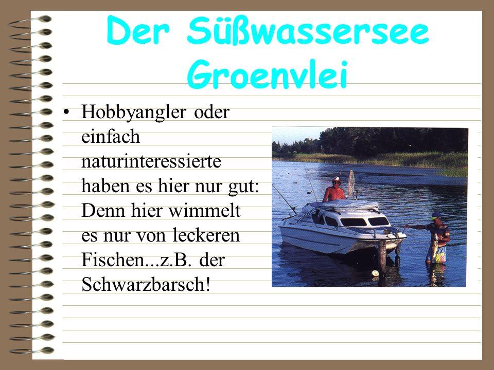Der Süßwassersee Groenvlei Hobbyangler oder einfach naturinteressierte haben es hier nur gut: Denn hier wimmelt es nur von leckeren Fischen...z.B. der