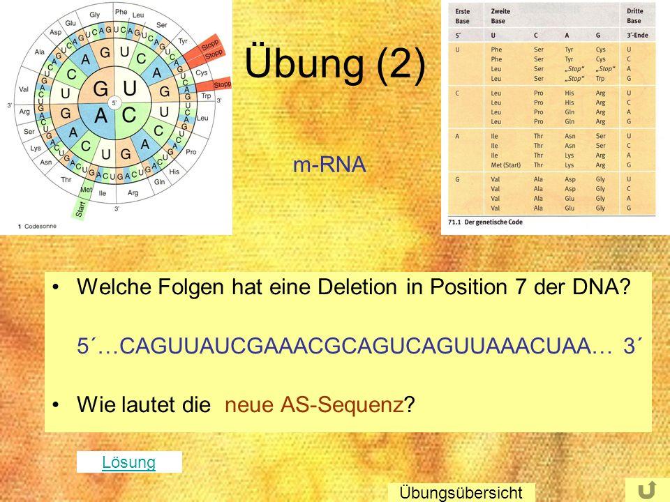 Übung (2) Welche Folgen hat eine Deletion in Position 7 der DNA? 5´…CAGUUAUCGAAACGCAGUCAGUUAAACUAA… 3´ Wie lautet die neue AS-Sequenz? m-RNA Lösung Üb